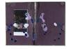 http://www.chervinskimirit.com/Assets/Images/7/15/Small/3ca_Mirit_06_04_17-076.jpg